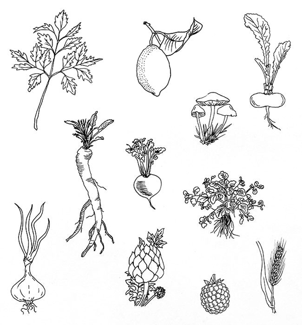 Hand drawn vegetable illustrations for vegetarian restaurant Spirit designed by Studio Beige